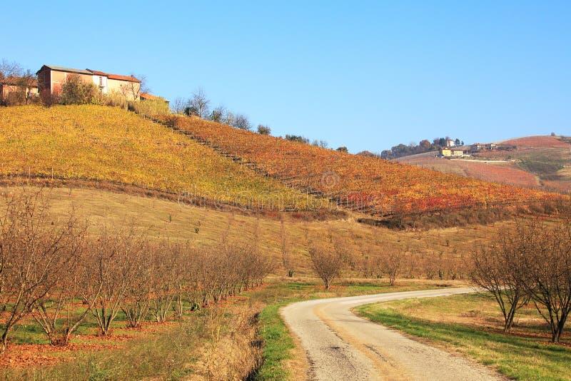 Colline e vigne del Piemonte alla caduta, Italia. immagine stock libera da diritti