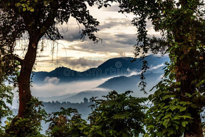 Colline nebbiose al tramonto, Guatemala fotografia stock