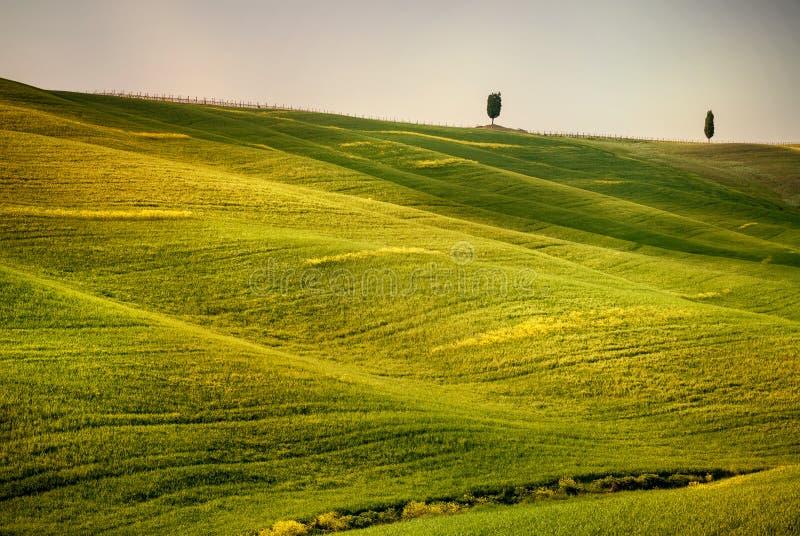 Colline toscane avec la rangée des arbres de cyprès au coucher du soleil Horizontal toscan l'Italie images stock