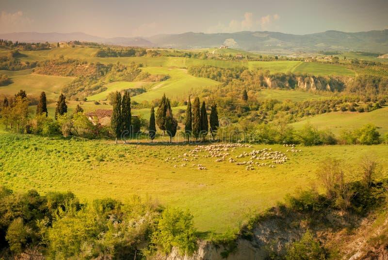 Colline toscane avec la rangée des arbres de cyprès au coucher du soleil Horizontal toscan l'Italie photo stock