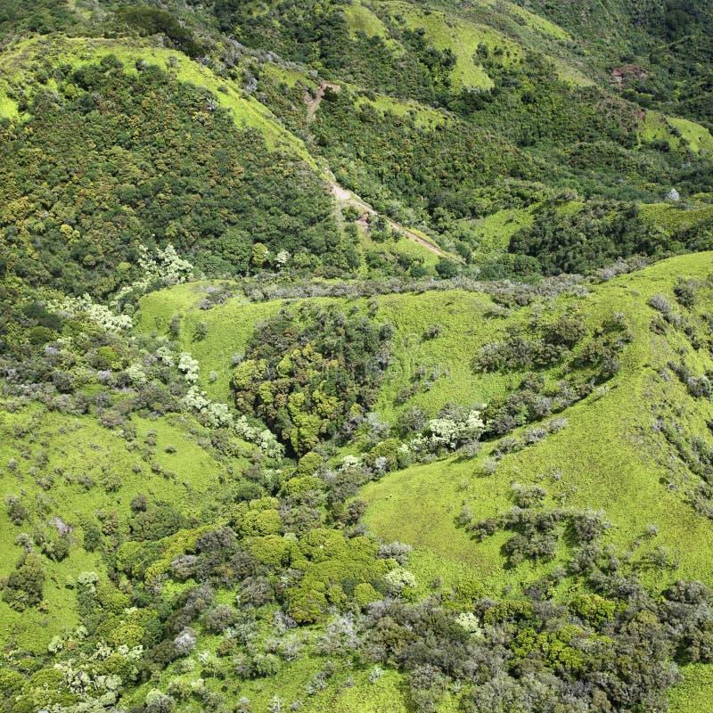 Colline tropicali. immagini stock libere da diritti