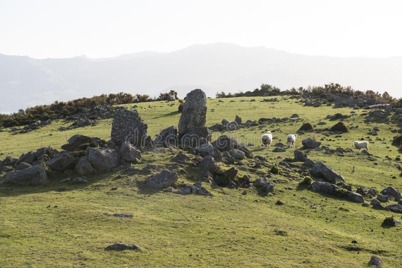 Colline verdi e montagne con le pecore, Nuova Zelanda immagini stock libere da diritti