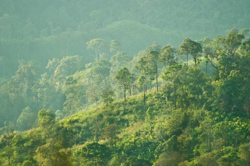 Collines avec la forêt images libres de droits