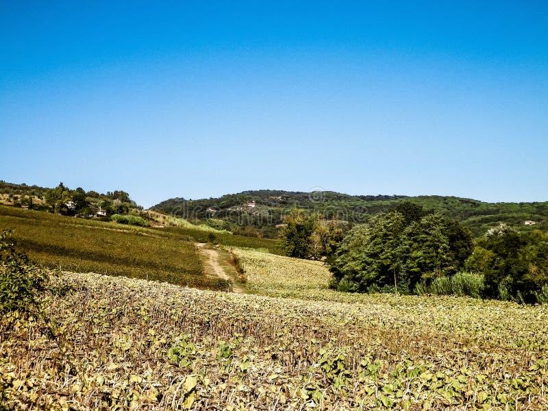Collines, champs et pr?s - vues typiques de la Toscane image stock