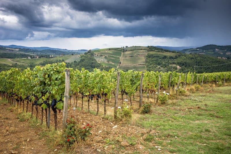 Collines de chianti avec des vignobles Paysage toscan entre Sienne et Florence l'Italie images libres de droits