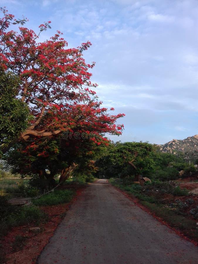 Collines de Horsley, Chittoor, Andhra Pradesh photographie stock libre de droits