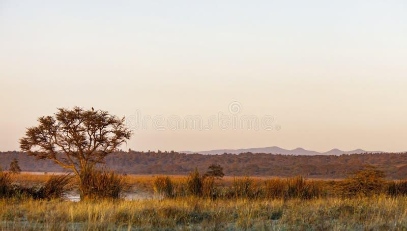 Collines de Ngong au Kenya image libre de droits