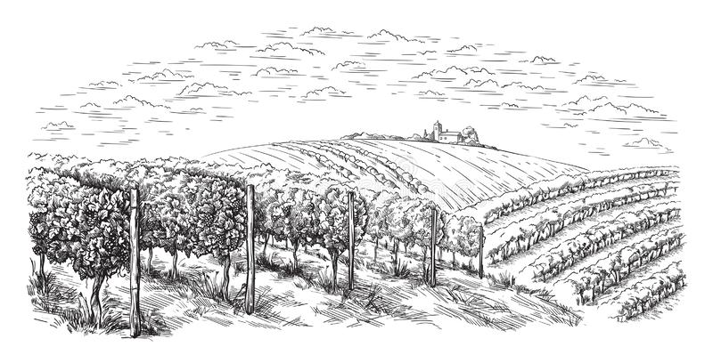Collines de plantation de vigne, arbres, nuages sur l'horizon illustration de vecteur