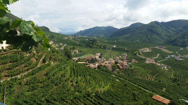 Collines de Prosecco de Notheast Italie images stock