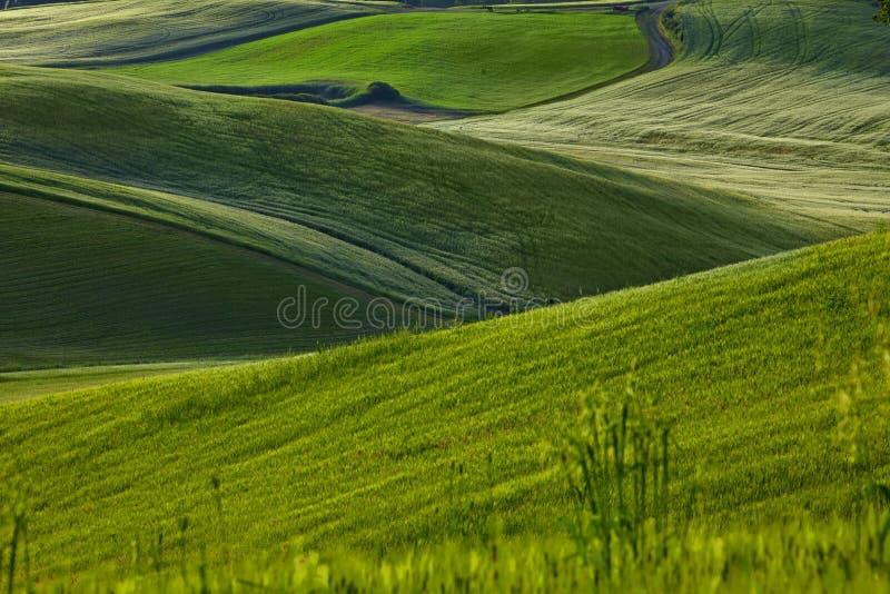 Collines vertes de la Toscane photographie stock libre de droits