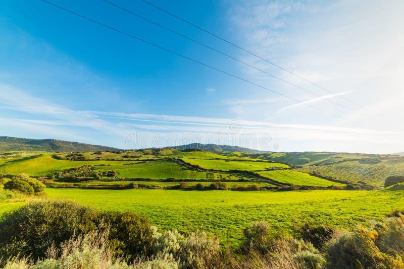 Collines vertes en Sardaigne photographie stock libre de droits
