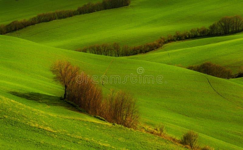 Collines vertes et fond d'arbres photo stock