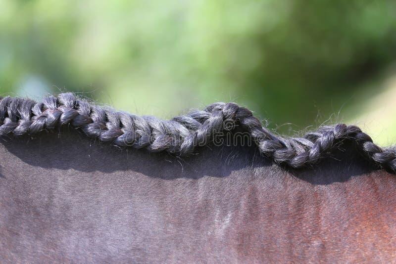 Collo di un cavallo di sport nel dressage fotografie stock libere da diritti