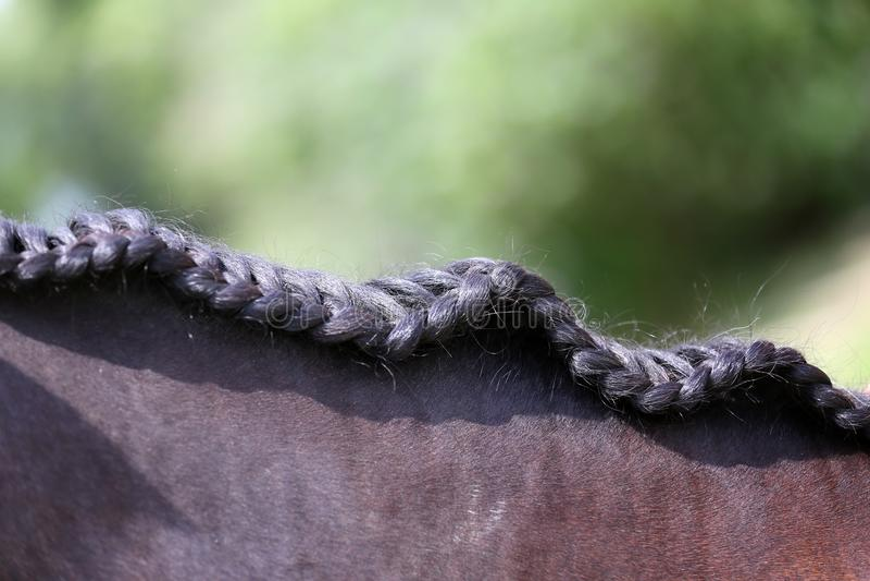 Collo di un cavallo di sport nel dressage fotografia stock libera da diritti
