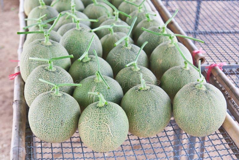 Collocate zbierający Japońscy melony zdjęcia royalty free