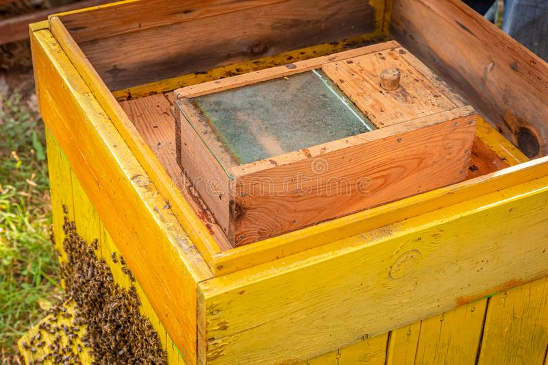 Colmeia aberta com abelhas durante a colheita no verão imagens de stock royalty free