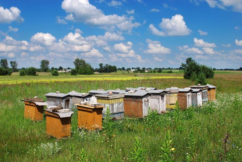 Colmeia da abelha fotografia de stock