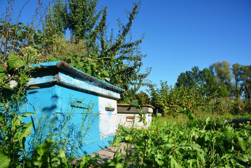 Colmeias azuis de madeira Apicultura natural em seu quintal Agains fotos de stock