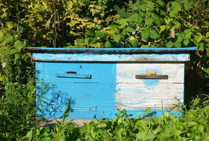Colmeias azuis ucranianas de madeira Apicultura natural em seu quintal Colmeia da abelha de Dadant imagens de stock