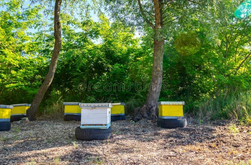 Colmeias coloridas pequenas na mola adiantada no pomar, apiário, exploração agrícola da abelha foto de stock