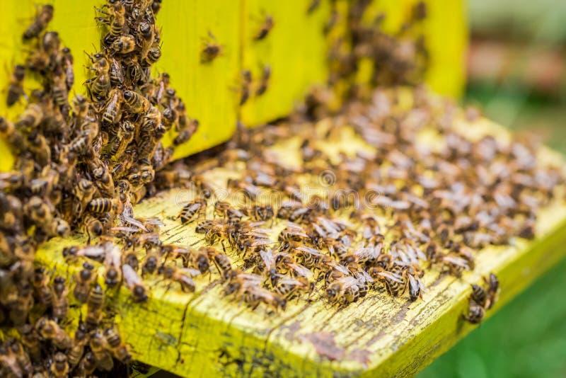 Colmeias naturais com as abelhas no jardim fotos de stock royalty free