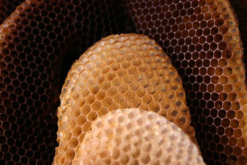 Colmena de la abeja fotos de archivo libres de regalías