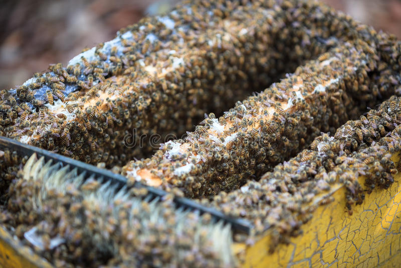 Colmena de la abeja de la abertura foto de archivo libre de regalías