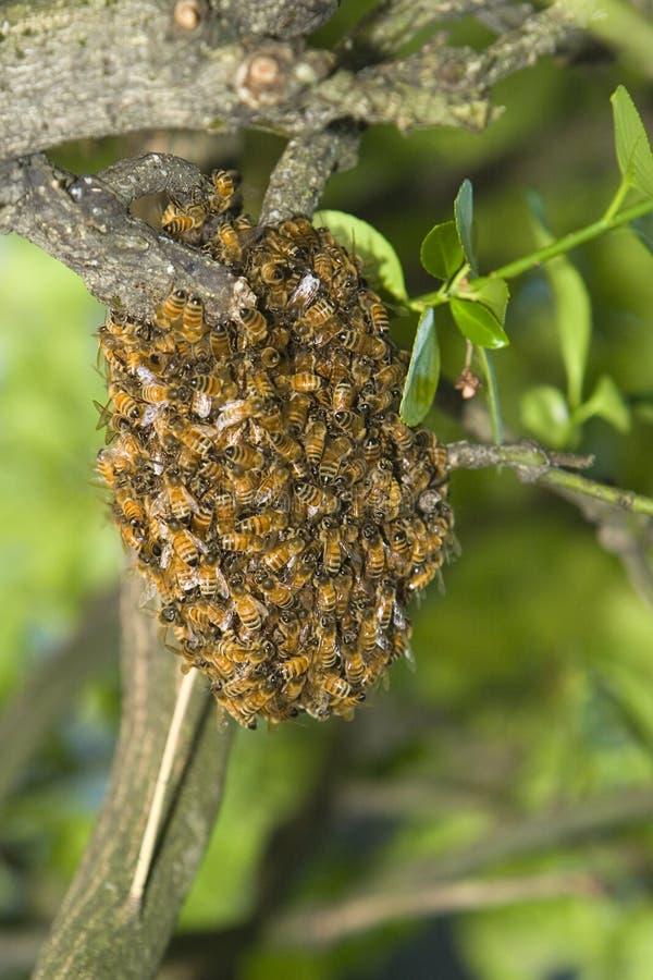 Colmena de la abeja de la miel fotos de archivo