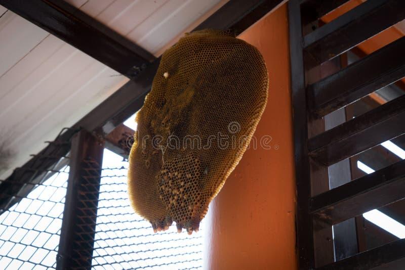 Colmena de la abeja debajo del tejado imágenes de archivo libres de regalías