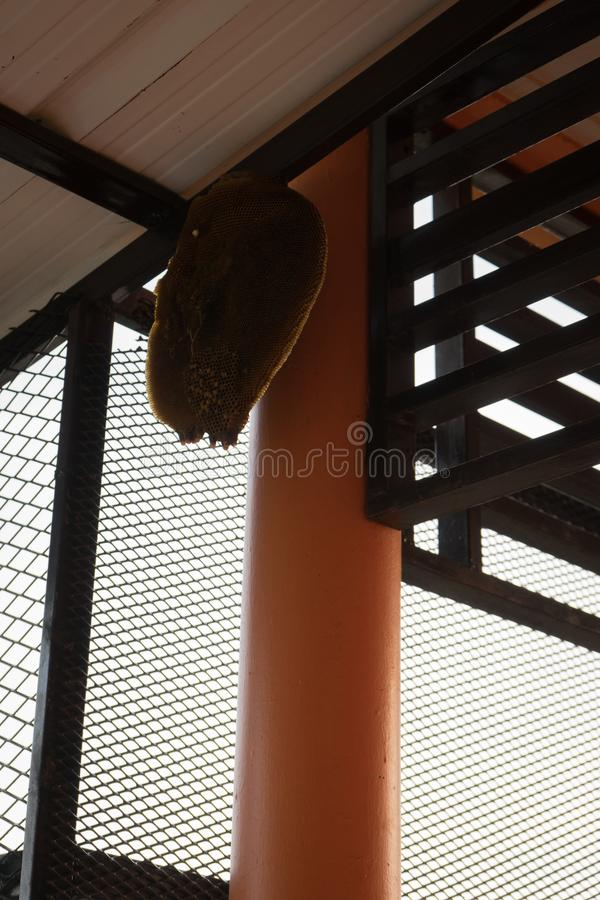 Colmena de la abeja debajo del tejado imagenes de archivo