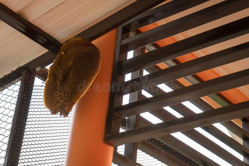 Colmena de la abeja debajo del tejado imagen de archivo