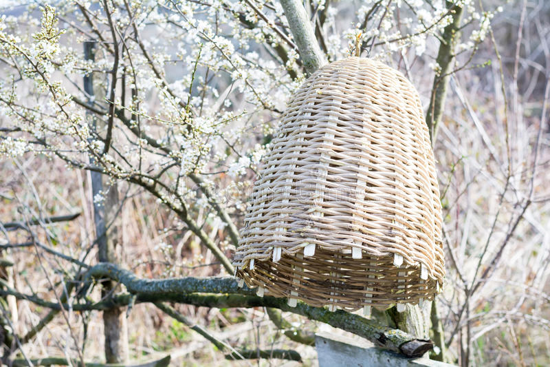 Colmena hecha a mano para capturar los enjambres de la abeja en naturaleza imágenes de archivo libres de regalías
