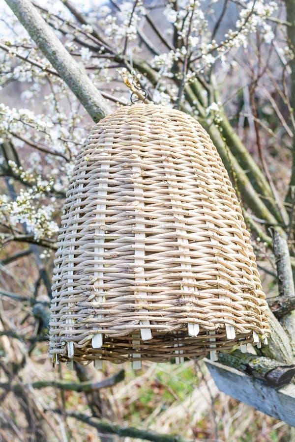 Colmena hecha a mano para capturar los enjambres de la abeja en naturaleza fotos de archivo