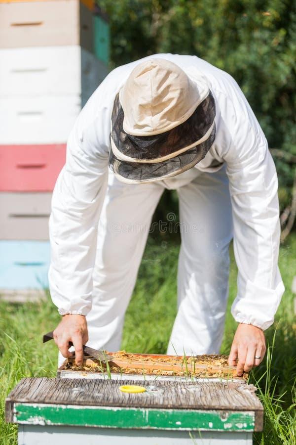 Colmenar de Working In His del apicultor fotografía de archivo