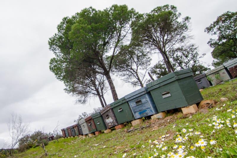Colmenar en el campo con los árboles de la hierba y de pino fotografía de archivo libre de regalías
