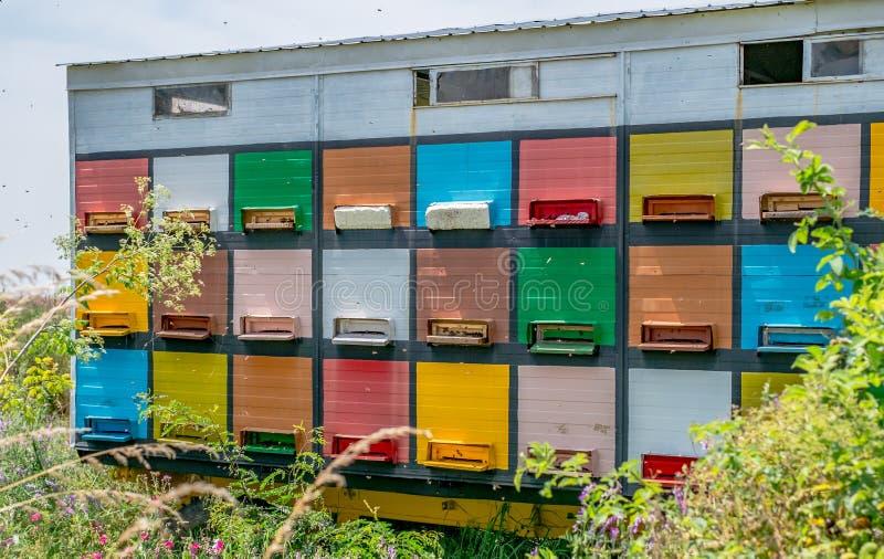 Colmenas coloreadas de la abeja en bosque fotos de archivo libres de regalías