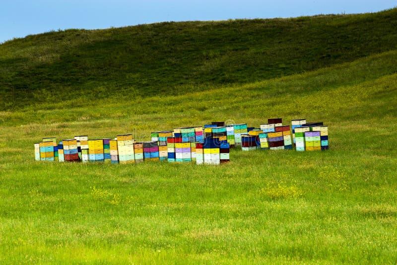 Colmenas coloridas de la colina del balanceo de Dakota del Sur, cerca de Cust foto de archivo
