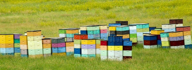Colmenas coloridas de la colina del balanceo de Dakota del Sur, cerca de Cust fotos de archivo libres de regalías