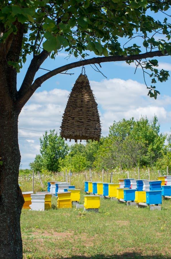Colmenas de la abeja Colmena antigua en un árbol foto de archivo libre de regalías