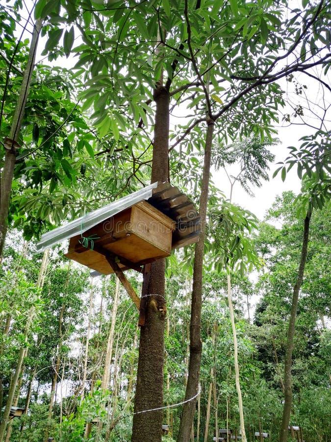 Colmenas de la abeja en bosque imágenes de archivo libres de regalías