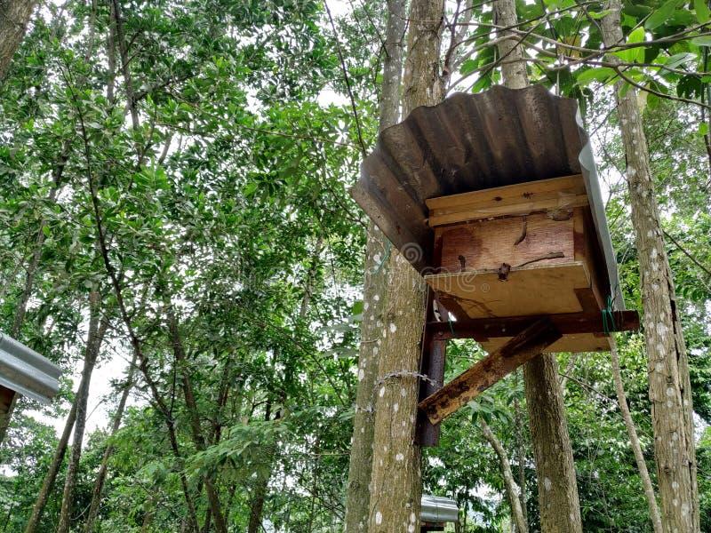 Colmenas de la abeja en bosque imagen de archivo