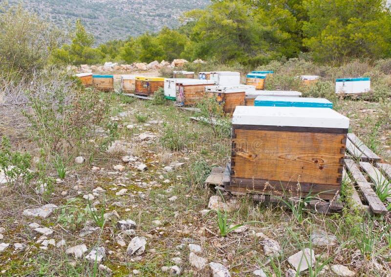 Colmenas de la abeja en un bosque fotografía de archivo