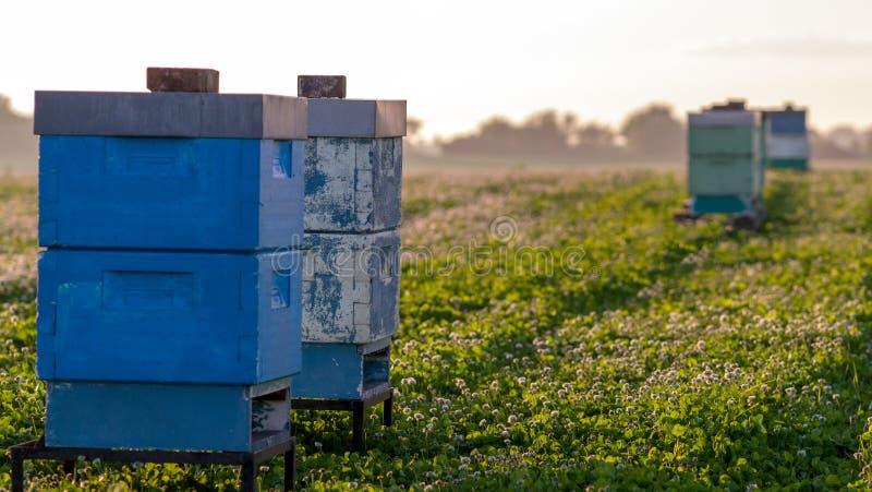 Colmenas de la abeja para la polinización fotos de archivo libres de regalías