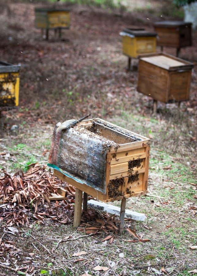 Colmenas de madera rurales imágenes de archivo libres de regalías