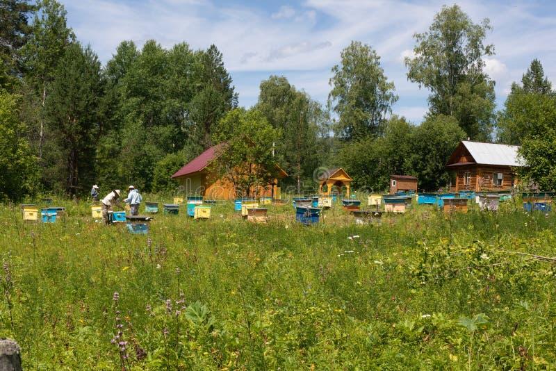 Colmenas en el colmenar Los apicultores están trabajando con las abejas y las colmenas en el colmenar, recogen los panales Apicul foto de archivo libre de regalías