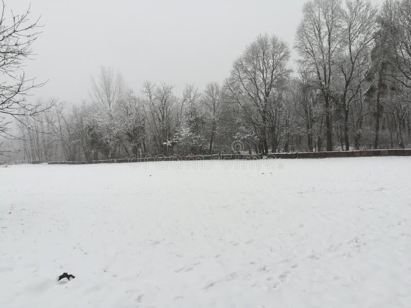 Colmenas en el invierno fotografía de archivo libre de regalías
