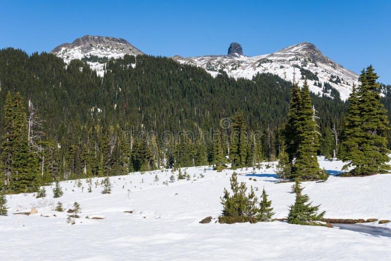 Colmillo del negro Nevado en parque provinvial cerca de la marmota fotografía de archivo libre de regalías