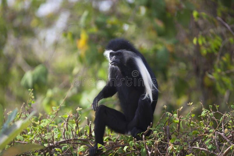 Scared Monkey Stock Photos - Download 254 Royalty Free Photos