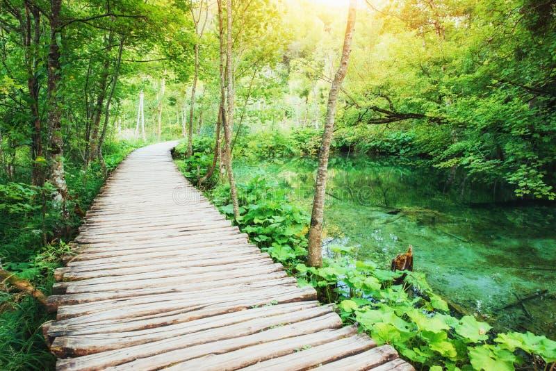 Colocação de madeira na água azul Croácia dos lagos Plitvice imagem de stock