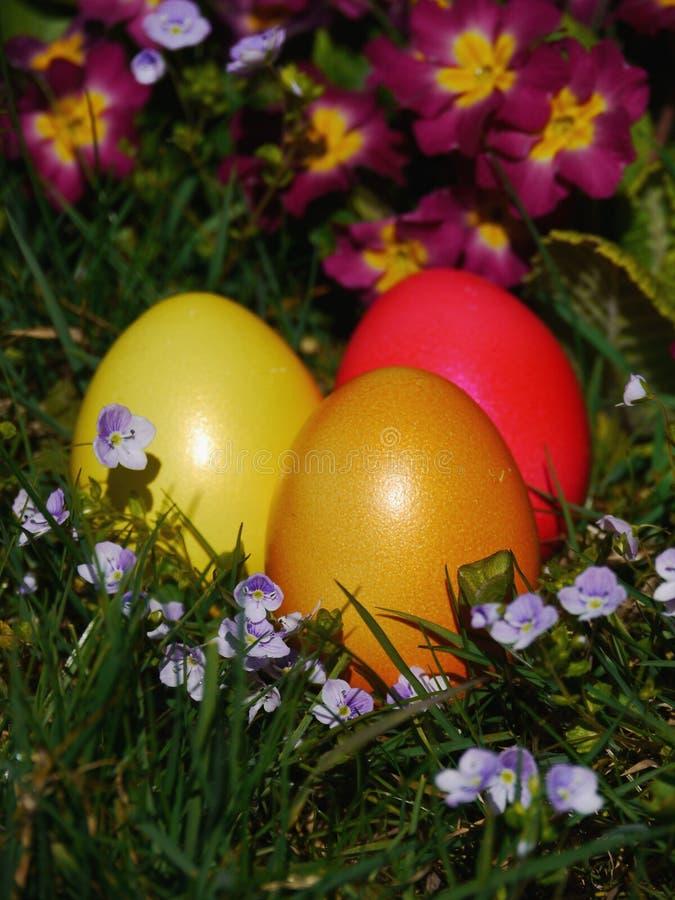 Colocação de ovos da páscoa no prado com flores imagem de stock